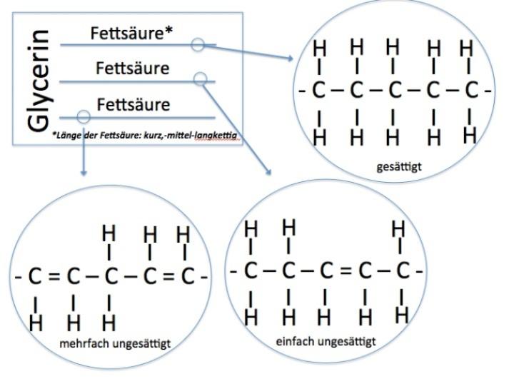 biochemie-fette