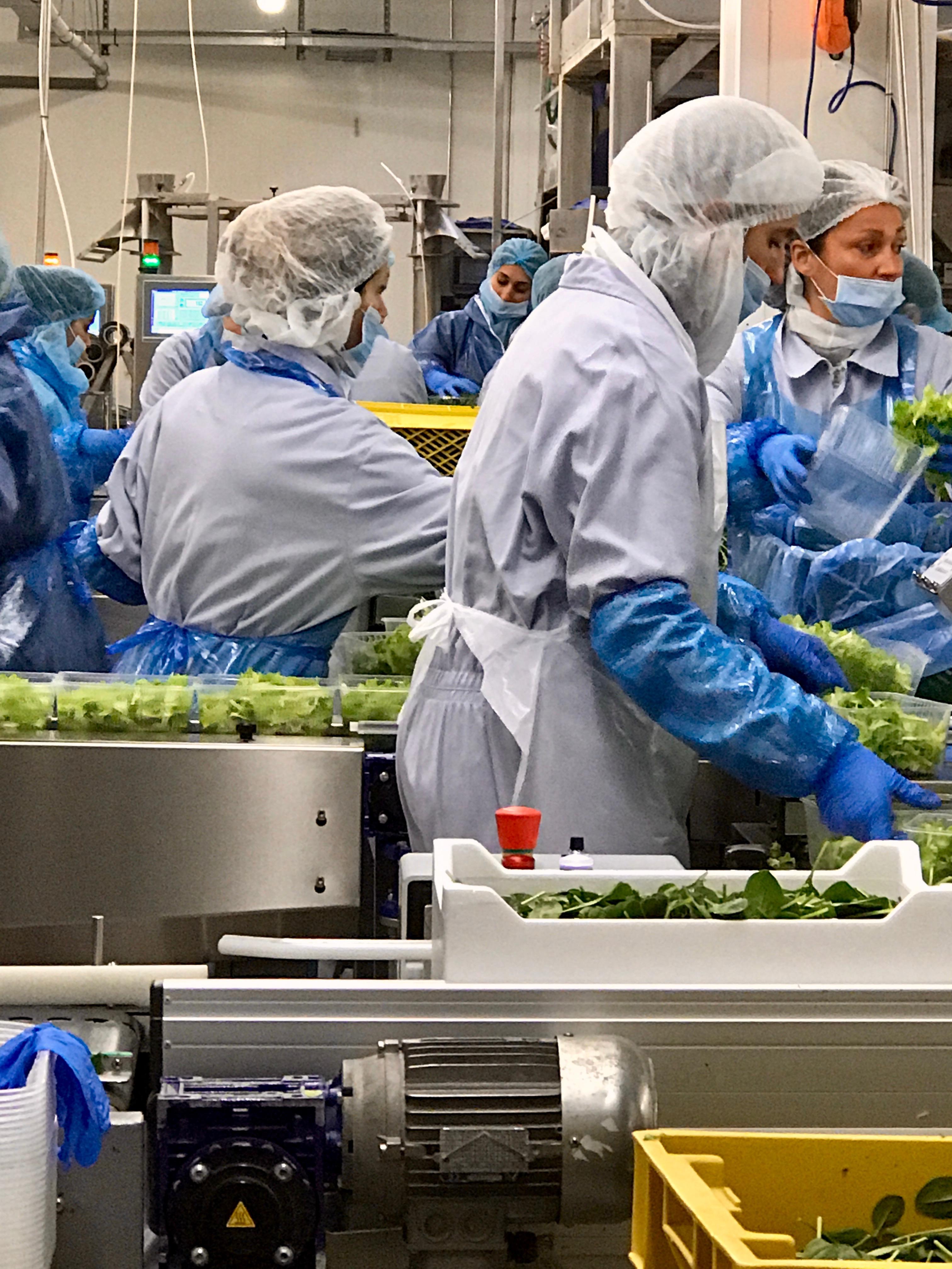 Mitarbeiter in Salatverarbeitung