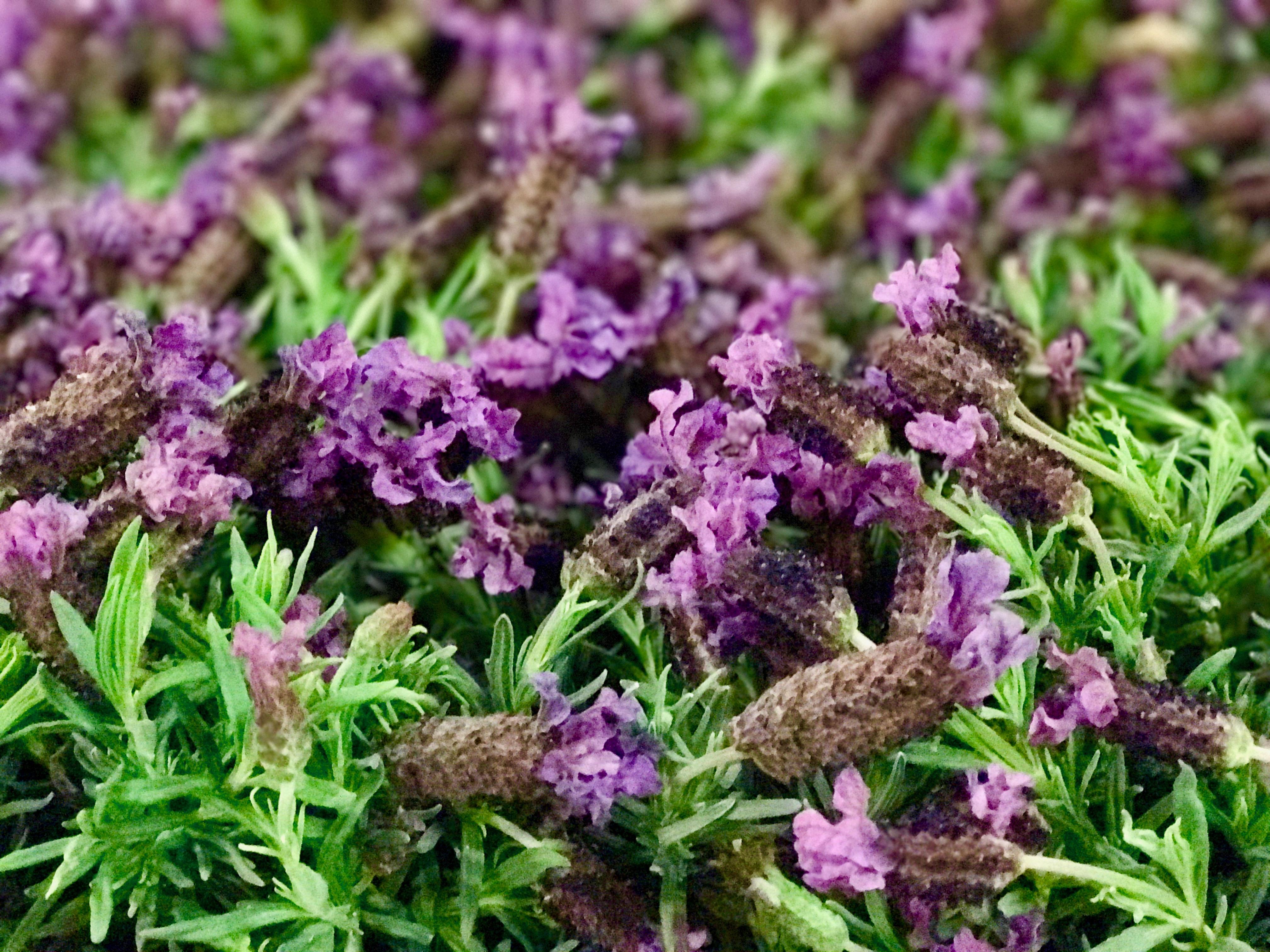 Lavendel auf Großmarkt
